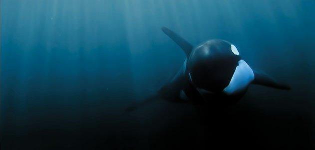 Luna-Orca-Culture-underwater-631.jpg__800x600_q85_crop